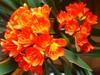 Orangecimg3659