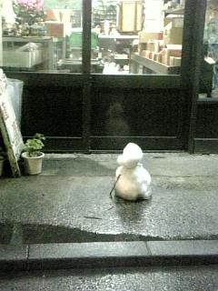 2/5横浜の雪