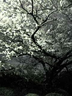 #203 夜桜収録♪